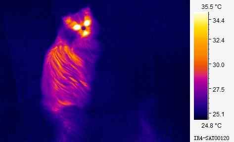 wrmebild einer katze - Warmestrahlung Beispiele